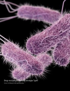 Identify the symptoms of salmonella